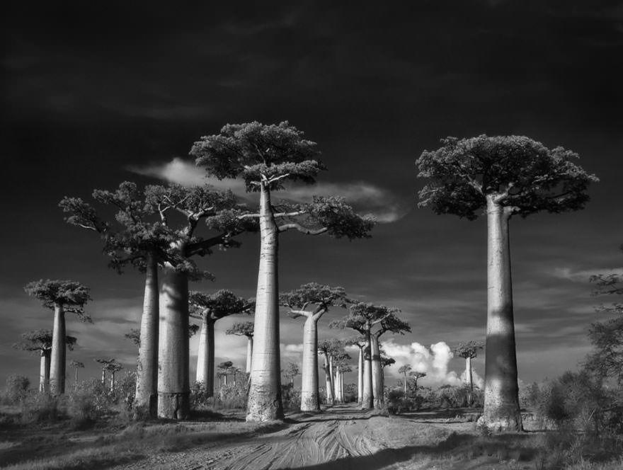 arbre-majestueux-2