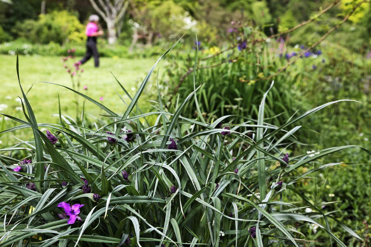 Le Jardin de Liliane 2