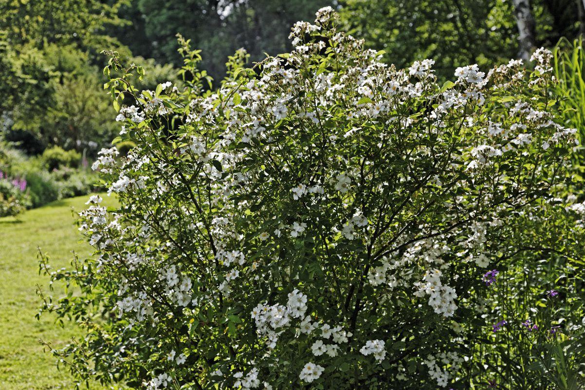 Le jardin de Liliane 4