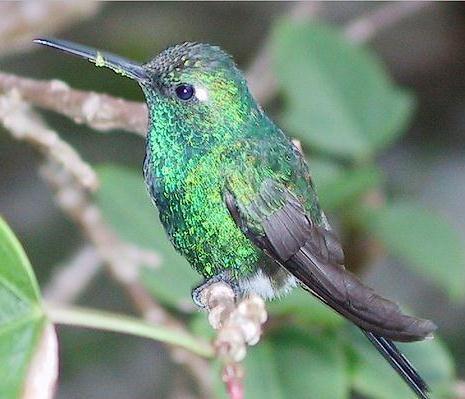 parc-colibri1.jpg