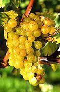 muscat-blc_edited-copie-1.jpg