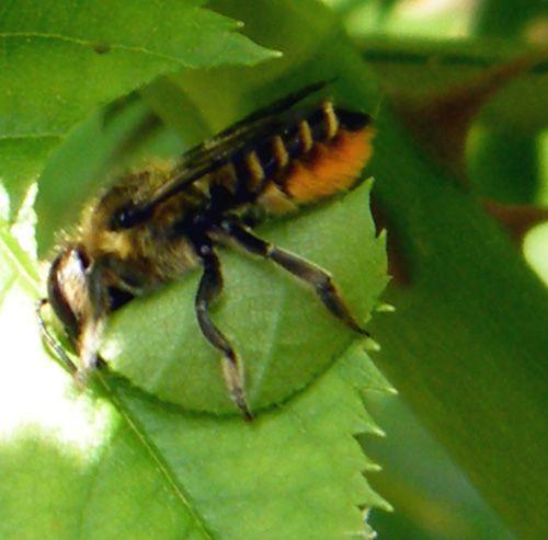 Album 1 - balades entomologiques