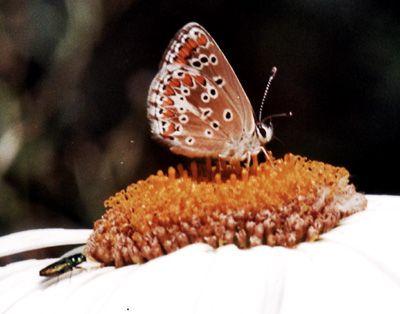 Papillons/chrono1125_1.