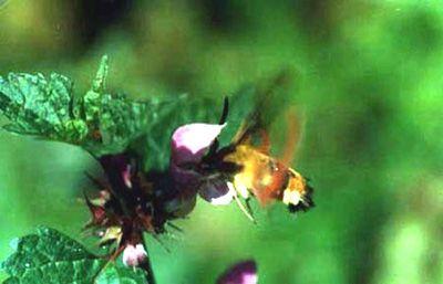 Papillons/chrono2497_1