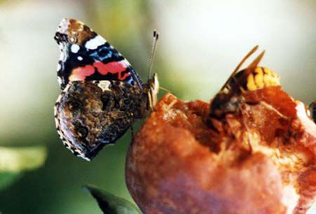 Papillons/chrono491_1