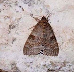 Papillons/chrono53_1_1