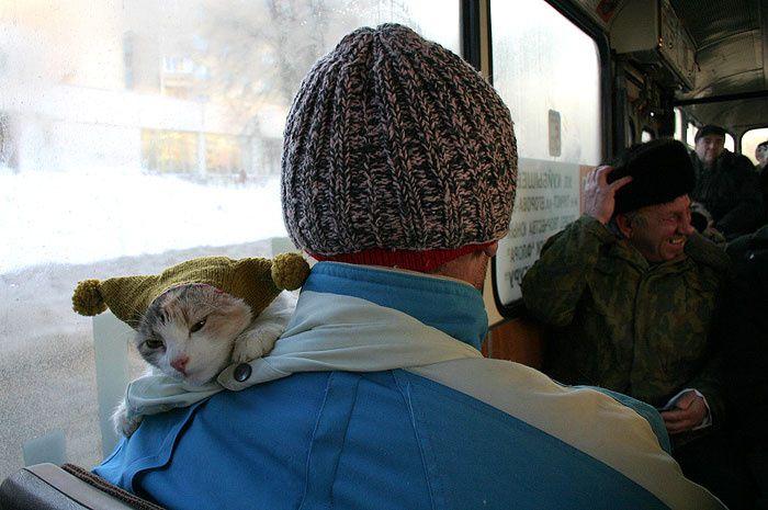 chat-bonnet.jpg