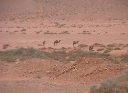 Desert-aride.jpg