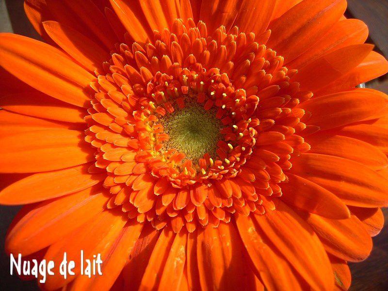 fleurs_008