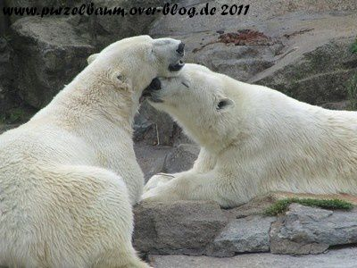 TosNa20110621 018
