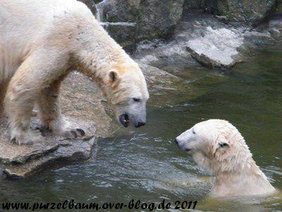 Knut20110130 024