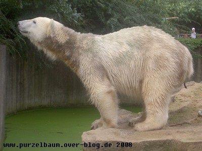 Knut20080822 115