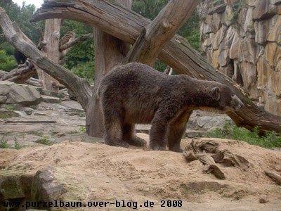 Knut20080914 134