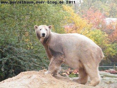 Knut20081025 020