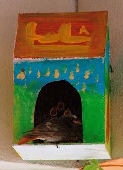 Blog de mariecaillou :LA CUISINE DE MAMIE CAILLOU, Bienvenue à nos nouveaux petits oiseaux...