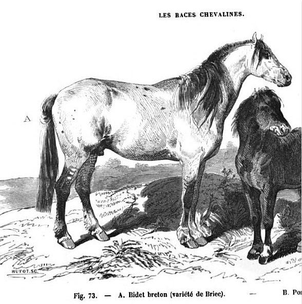 Bidet breton Briec - Source Louis Moll 1861