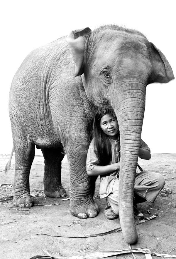 elephant asian photo Carol Stevenson
