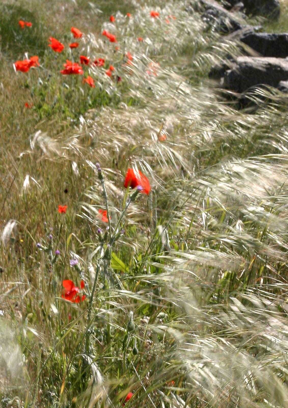 les-fleurs d'ici