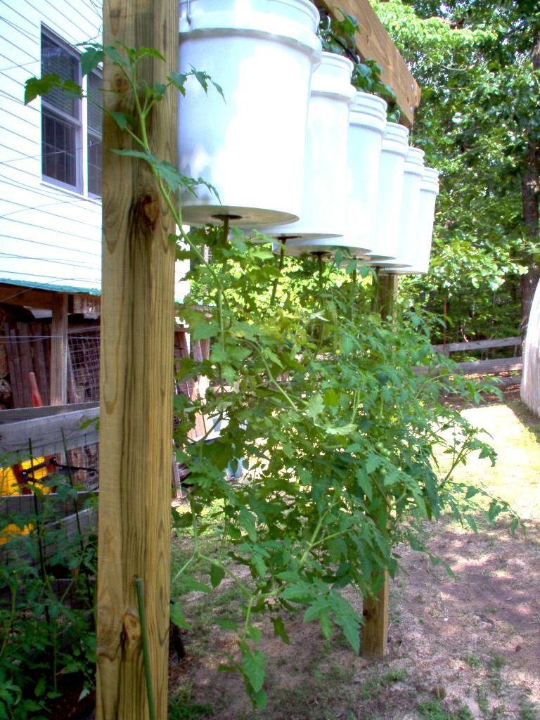 Faire Pousser Tomates En Pot comment faire son potager sur bottes de paille ? - natures