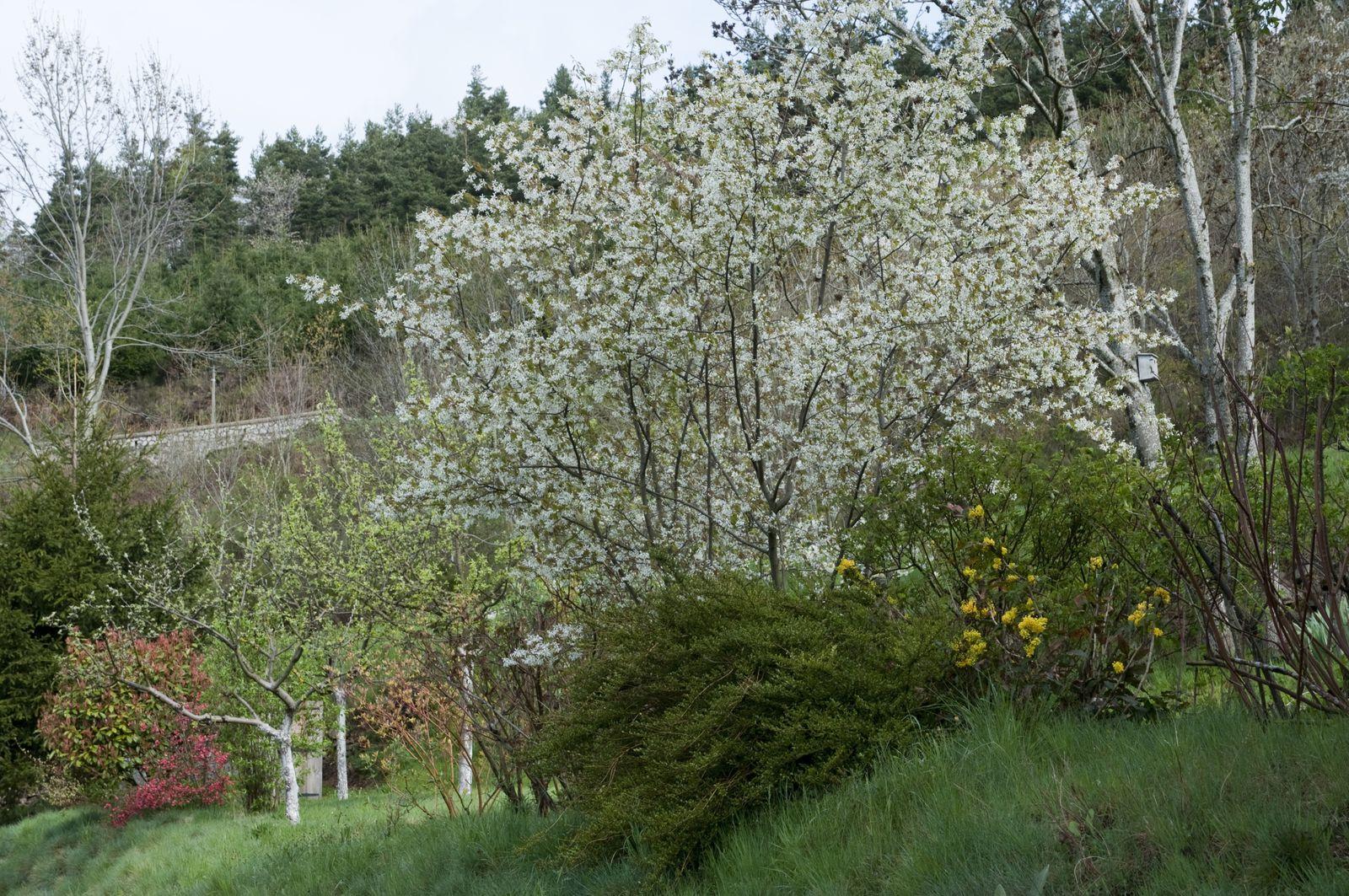 Arbuste Terrain Sec Ombre inventaire arbres et arbustes pour un jardin de montagne