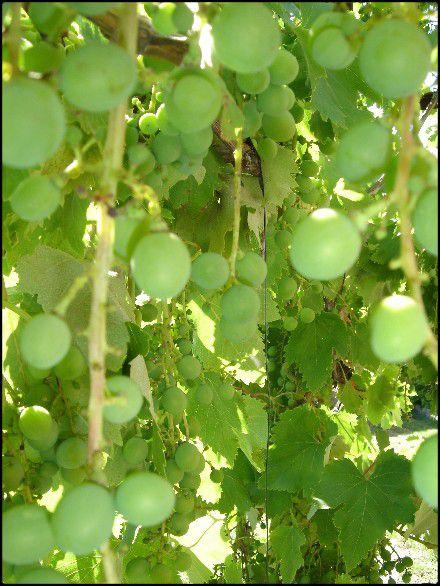 Web Le 5 Juillet 2010 Abricots.Tomates.Lavande.Oli-copie-29