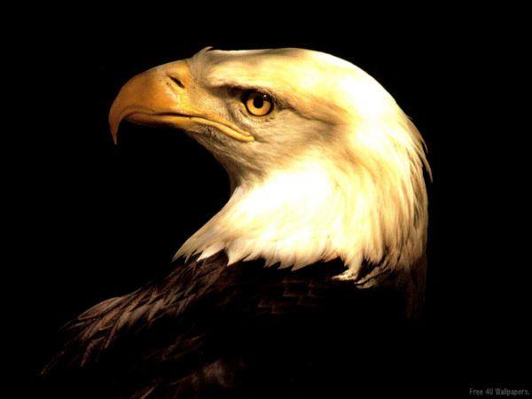 Les-animaux-et-leurs-pouvoirs-L-aigle