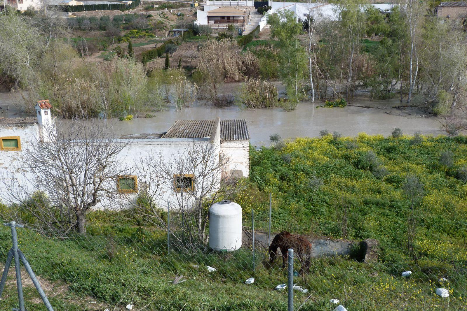Río Genil Badolatosa 23-03-2013