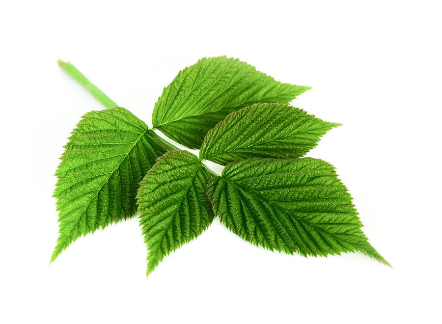 Remedy - Raspberry leaf - Pain - The Enchantment