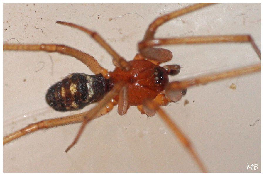 Arachnides 03 5329