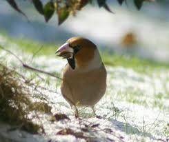 oiseaux.05.jpg
