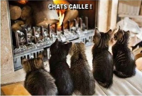 chat-cailleJPG.JPG