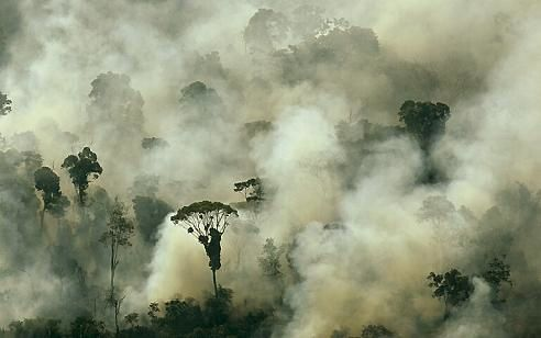 Incendies-Amazonie.jpg