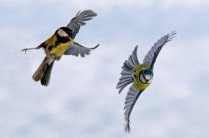 enchantement oiseaux
